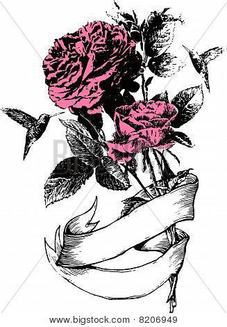rose flower illustration