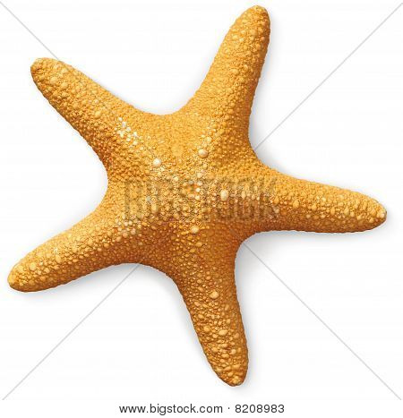 Overhead View Of A Sea Starfish On A White Background