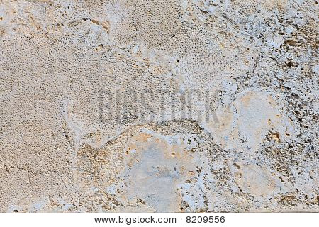 Limestone Background With Fossil