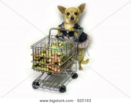 a female chihuahua shopping for her groceries. poster