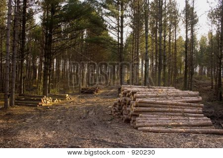 Log Stacked  On Logging Road