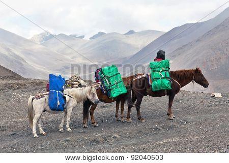 Three Horses With Heavy Load