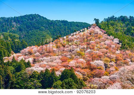 Yoshinoyama, Nara, Japan spring landscape.