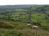 Two English sheep grazing with a view of the valley Peak District National Park Manchester England poster