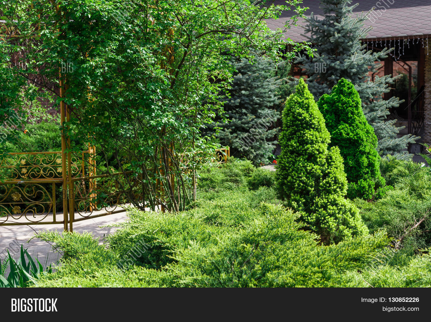 Beautiful Landscape Design Evergreen Trees And Shrubs In Sunlight Modern Landscaping Fir