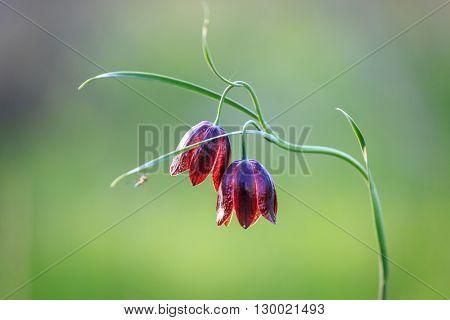 nice violet wild flowers macro photo