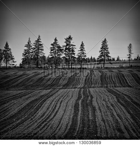 A treeline on the edge of a freshly planted potato field.