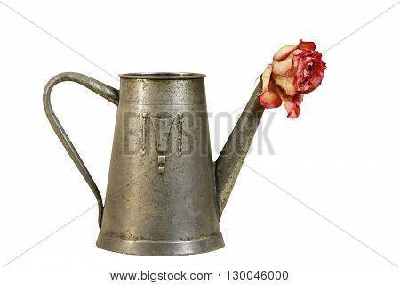Dried rose blossom in vintage metal jug.
