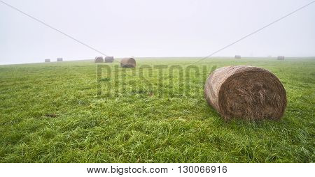 Silage on meadow with fog on the background