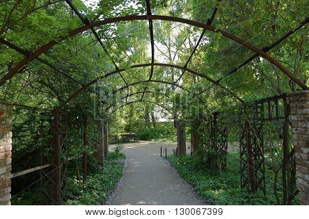 Arch Of Wild Grapes