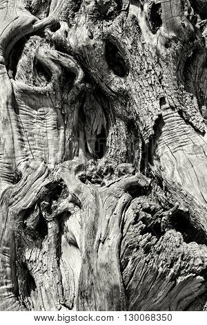 Black and white shot of stump of a tree. Closeup