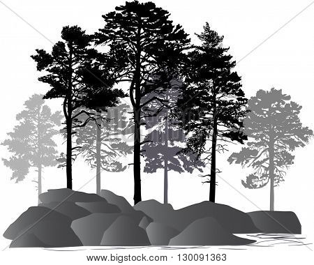 illustration with pine trees in rocks isolated on white background