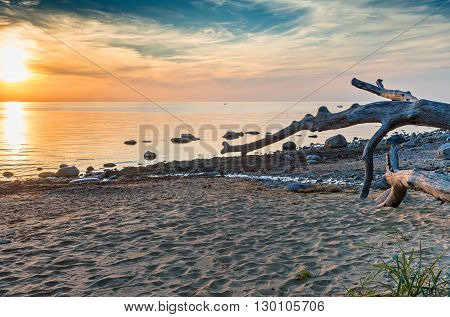 Wooden snag at sandy beach of the Baltic Sea