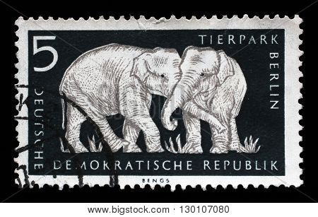 ZAGREB, CROATIA - JULY 02: a stamp printed in GDR shows Elephant, Berlin, German Zoological Garden, circa 1956, on July 02, 2014, Zagreb, Croatia