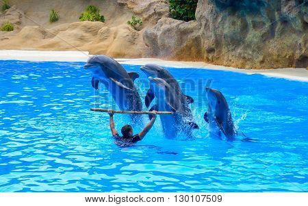 Tenerife, Spain - May 10, 2016: Beautiful dolphin show inside a dolphinarium with a man trainer