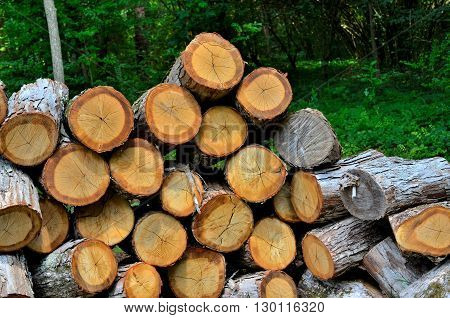 Wood log pile ready to be cut for firewood.