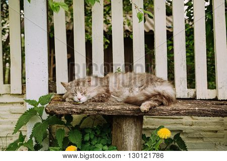 Lazy domestic grey cat resting on the bench outdoor in summer, copy space