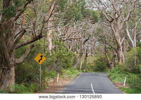 Reverse curve road sign in yellow at the road trip thought many big gum trees at Otway National Park in Australia