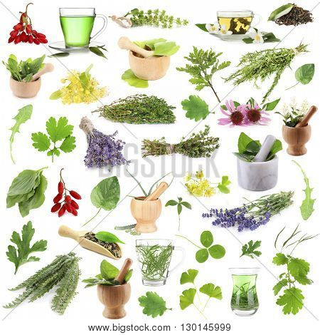 Collage of medicinal herbs isolated on white