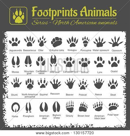 Animals Tracks - North American animals - vector set