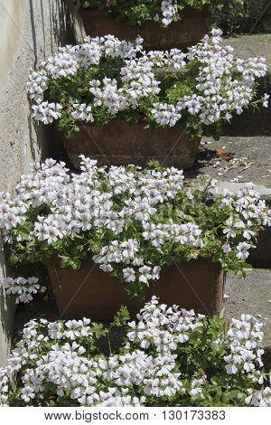 white flower in the vase on step