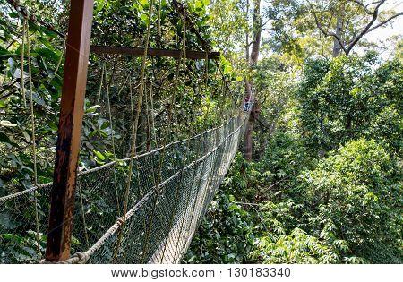 Canopy bridge walk in the Taman Negara Nationalpark, Malaysia