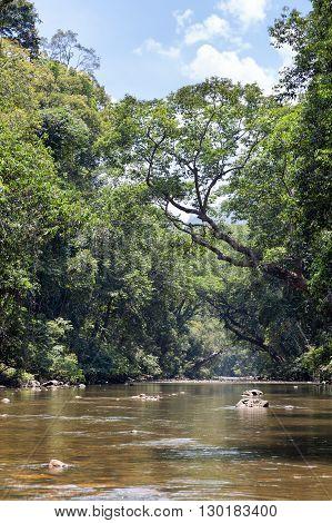 River through the jungle in the Taman Negara Nationalpark, Malaysia