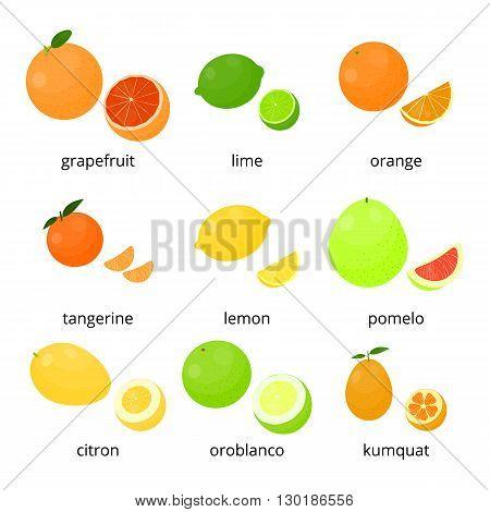 Bright cartoon citrus fruits with names isolated on white background. Grapefruit, lime, orange, tangerine, lemon, pomelo, citron, oroblanco, kumquat.