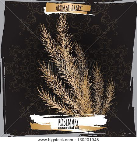 Rosmarinus officinalis aka rosemary sketch on elegant black lace background. Aromatherapy series. Great for traditional medicine, perfume design, cooking or gardening.