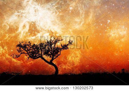 Fantasy Alien Landscape With Lone Tree