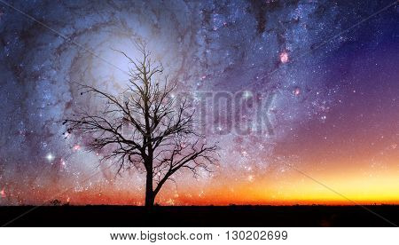 Fantasy Alien Landscape With Lone Tree And Galaxy Vortex