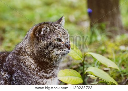 Photo of the Pretty Single Cat Over Natural Background