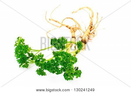 Green Parsley with Root Isolated on White Background