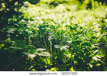 Beautiful green colors in lawn forest vintage filer
