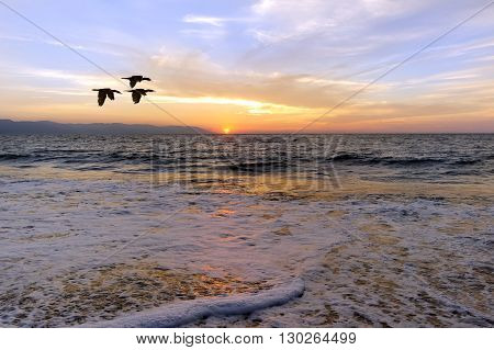 Ocean sunset birds is birds silhouette is three birds in a flight of freedom and inspiration towards a vibrant bright sun against an beautiful orange sunset sky.