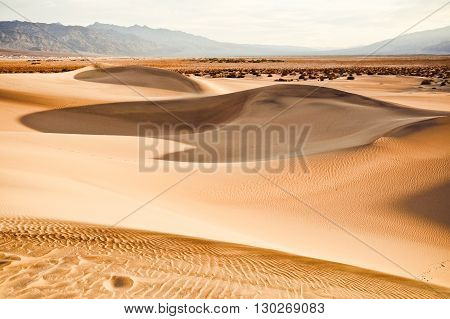 Mesquite dunes in Death Valley California USA.