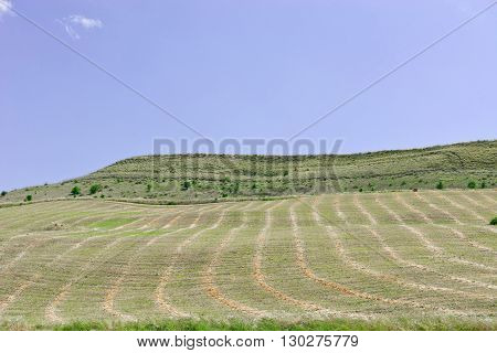Mown Field on the Hill in Sicily Italy
