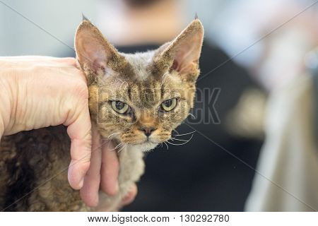 Grumpy Cat Looking At You