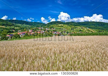 Wheat field and pictoresque mountain village in pure green nature Sudovec village in Croatia