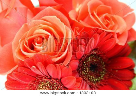 Attractive Orange  Rose Background
