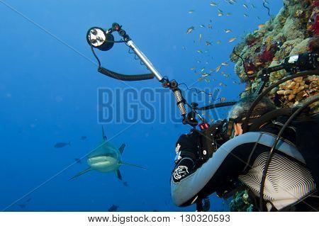 A Scuba Divera Grey Shark Jaws Ready To Attack A Photographer Scuba Diver