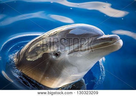 Dolphing Smiling Eye Close Up Portrait