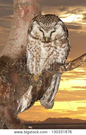 Isolated Owl On The Sunset Yelllow Background