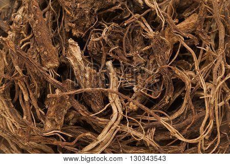Organic Indian Coleus (Plectranthus barbatus) roots. Macro closeup background texture.