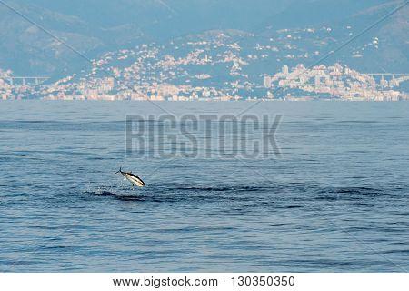 Tuna Fish Jumping Outside The Sea