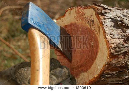 Axe In Cut Tree