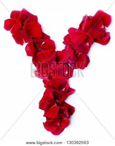 Alphabet Y Made From Red Rose
