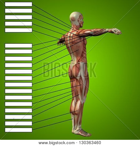 3D illustration of a concept or conceptual 3D male or human anatomy, a man with muscles and textbox on green gradient background