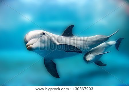 Dolphin Mother And Calf Underwater Looking At You
