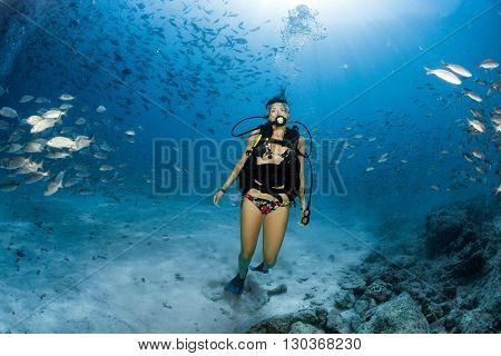 Beaytiful Latina Diver Inside A School Of Fish